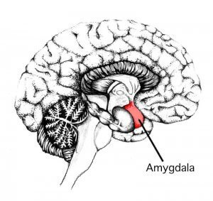 Fitting Yoga into a busy schedule - make the Amygdala work for you